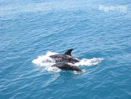 海豚母子共游.jpg