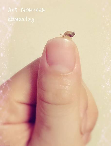 小小小蝸牛