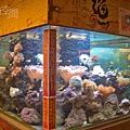 小型海底世界魚缸.jpg