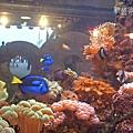 魚缸內的海底世界1.jpg