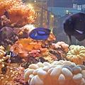 魚缸內的海底世界2.jpg