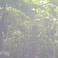 網室栽種.jpg