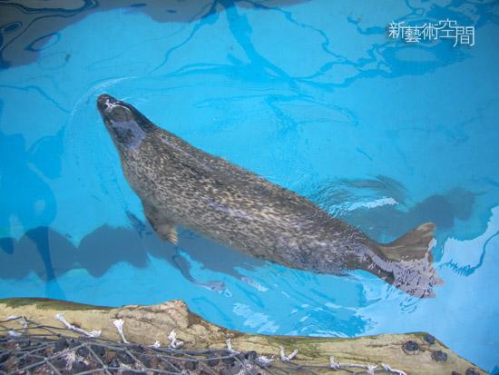 悠游中的海豹.jpg