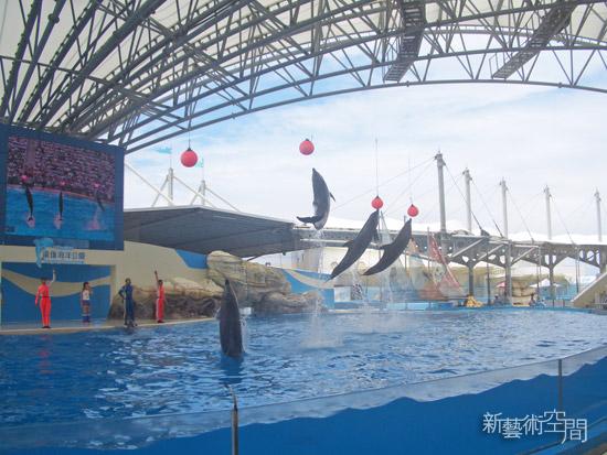 跳躍吧海豚.jpg