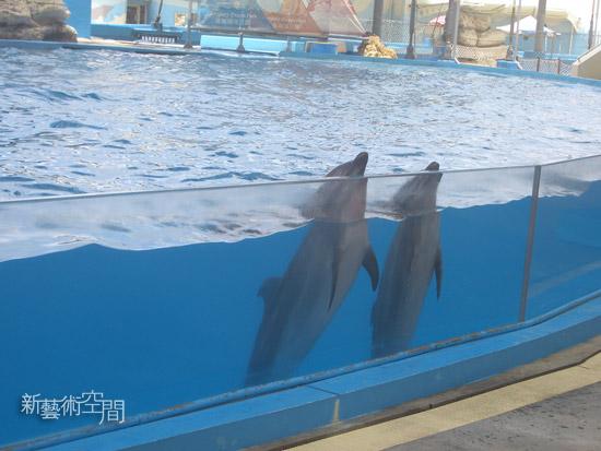 可愛的海豚.jpg