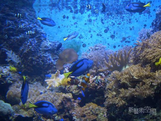 美麗的海底世界.jpg