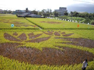 2009彩繪稻田