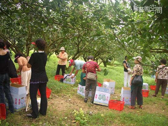 熱鬧的柚子園.jpg