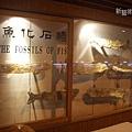 魚化石牆.jpg