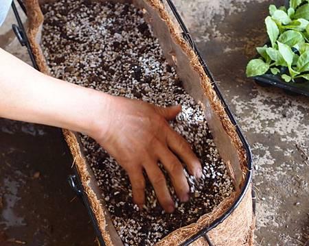 3.將土充分抓濕40-78