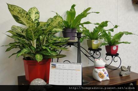 辦公室綠化-small.jpg