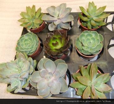 九盆植栽-small.jpg