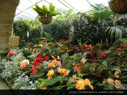 塔斯馬尼亞 皇家植物園溫室花房-3.jpg