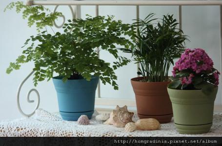 園藝調色盤 版頭照片.jpg