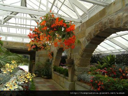 塔斯馬尼亞 皇家植物園溫室花房-5.jpg