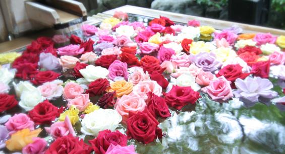 三朝館玫瑰湯