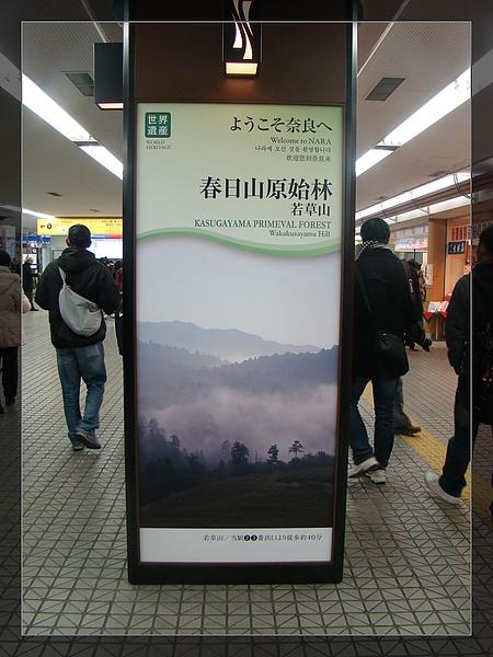 DSC05452-1.jpg
