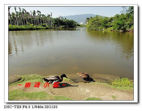 DSC0034710.jpg