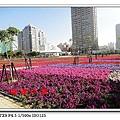 DSC011680.jpg