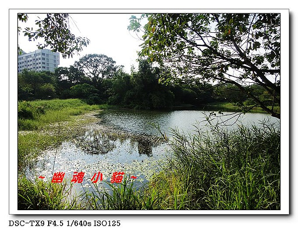 DSC0101515.jpg