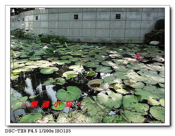 DSC0036922.jpg