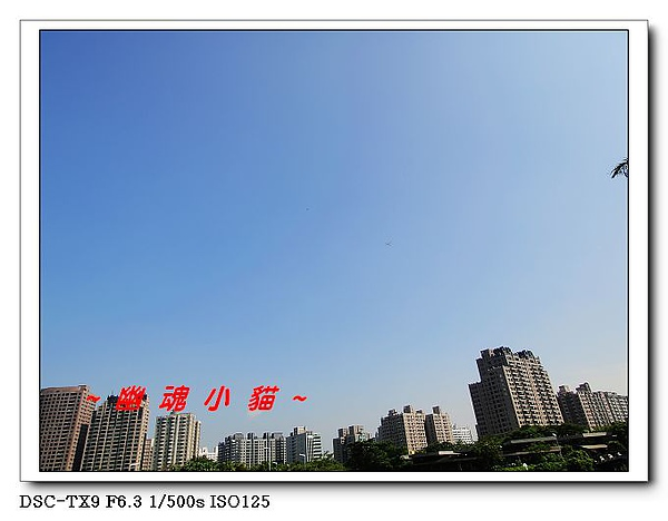 DSC0035815.jpg