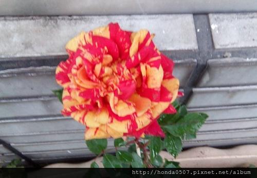 IMG_20140208_172054