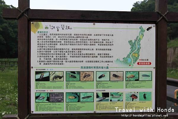 螢火蟲種類及知識