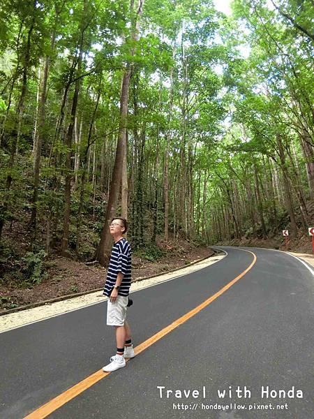 菲律賓宿霧薄荷島klook一日遊人造林網美拍照景點
