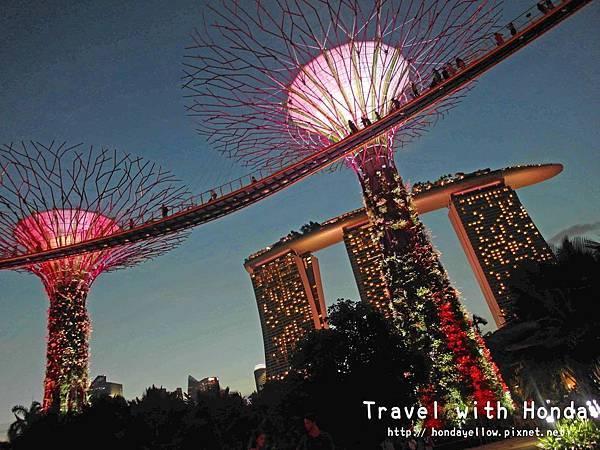 新加坡夜景推薦Supertree Grove