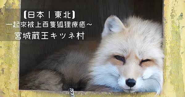 【日本|東北】一起來被上百隻狐狸療癒吧|宮城蔵王キツネ村.jpg
