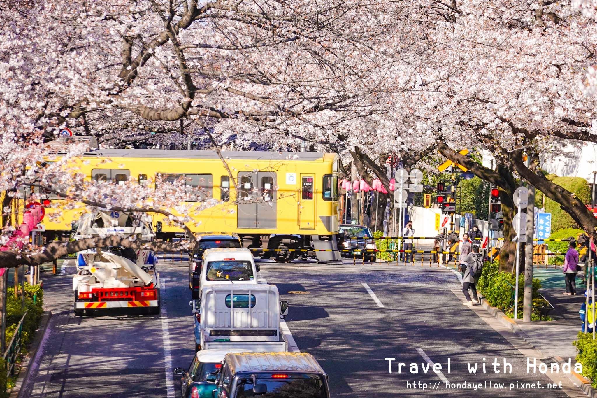 日本-你絕對會愛上的12個東京賞櫻景點-中野.jpg