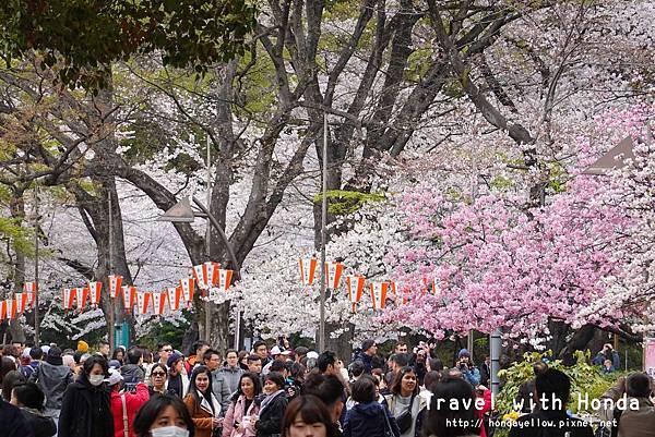 日本-你絕對會愛上的12個東京賞櫻景點-上野恩賜公園.jpg