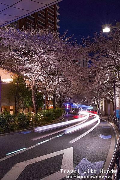 日本-你絕對會愛上的12個東京賞櫻景點-六本木櫻花道.jpg