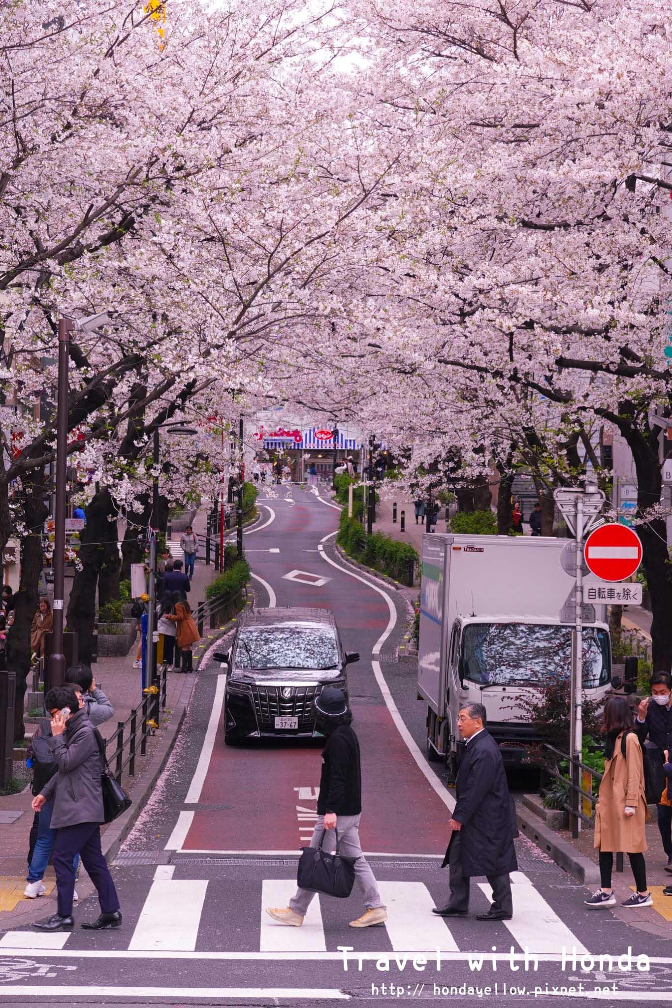 日本-你絕對會愛上的12個東京賞櫻景點-渋谷櫻花道.jpg
