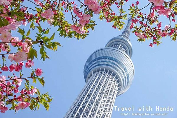 日本-你絕對會愛上的12個東京賞櫻景點-晴空塔.jpg