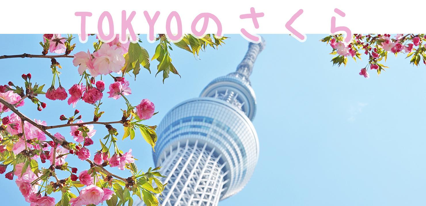 【日本】挑戰!櫻花季用25000元,玩遍東京/富士山/福島/仙台10天9夜