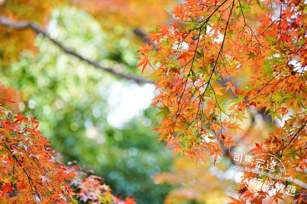 玩遍大阪京都CP值最高必備票券~京阪電車一日券景點推薦-31.jpg