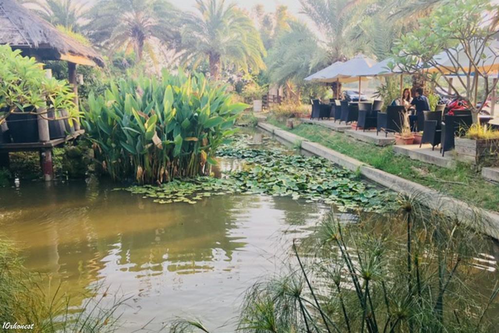 莫內咖啡水池