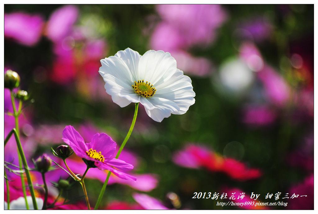 nEO_IMG_DSC_9464.jpg