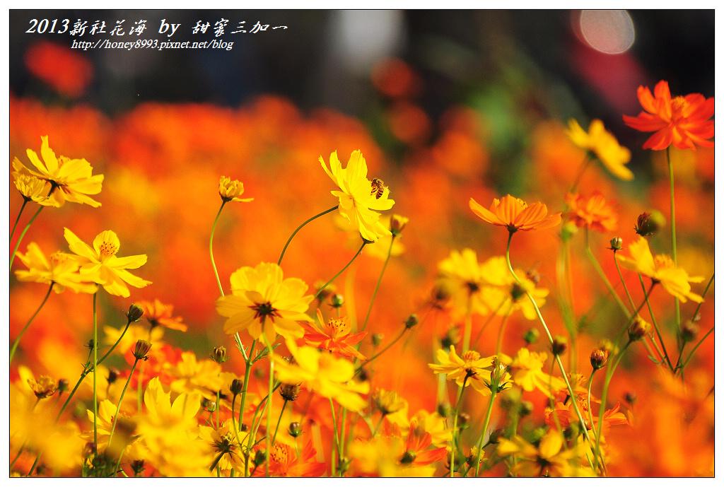 nEO_IMG_DSC_9517.jpg