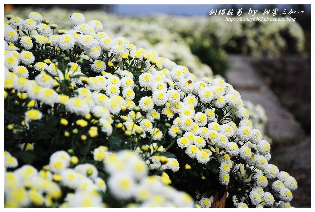 nEO_IMG_DSC_9628.jpg