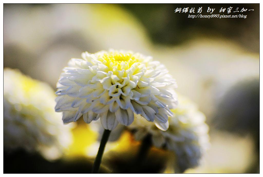 nEO_IMG_DSC_9860.jpg