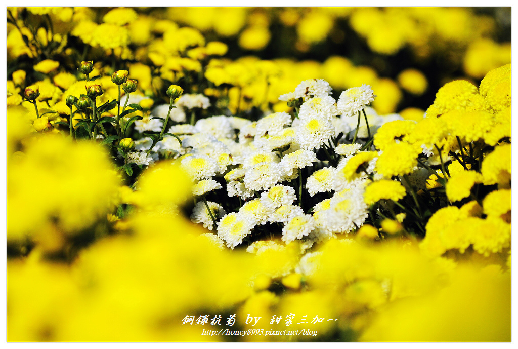 nEO_IMG_DSC_9877.jpg
