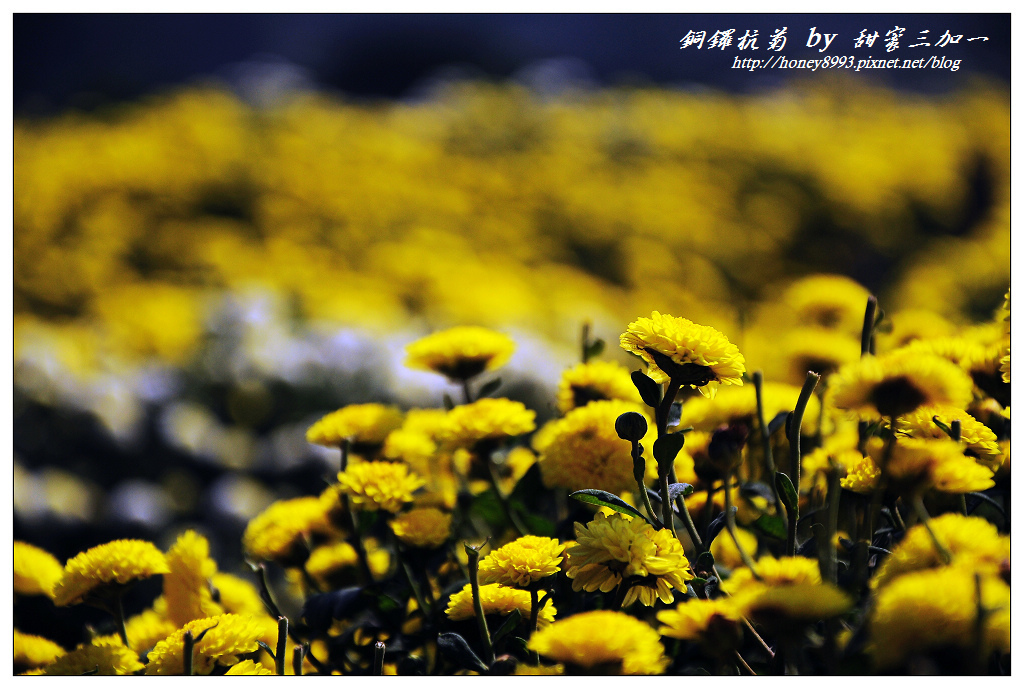 nEO_IMG_DSC_9913.jpg