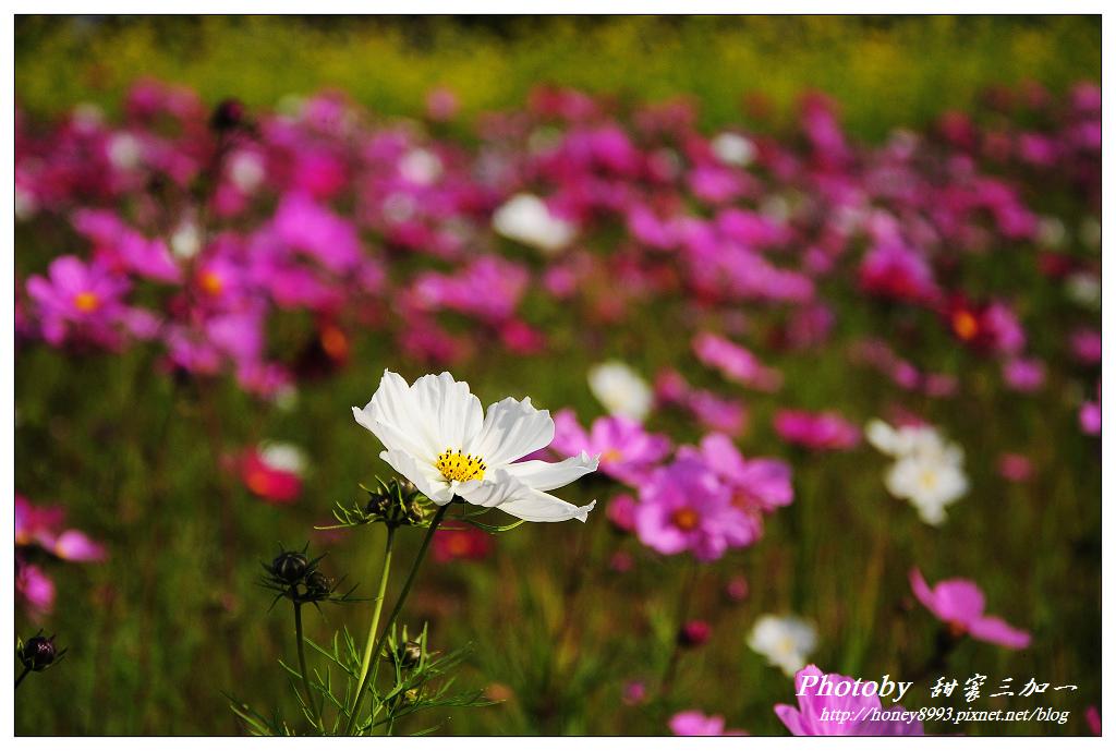 nEO_IMG_DSC_1614.jpg
