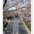 2008 03 26 Hikarigaoka park