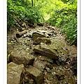 溪水中的石頭步道,難走、但是好過癮。