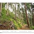 5號步道的林相和沿路上山的風景很不同