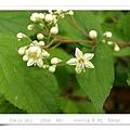 很可愛的不知名小花,像是漂亮的小星星。